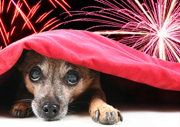 TIPS TO TEACH YOUR DOG NOT TO REACT TO FIREWORKS AND THUNDERSTORMS