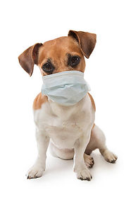 dog with surgeon mask.jpg