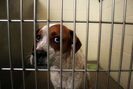 Dog in Shelter 2.jpg