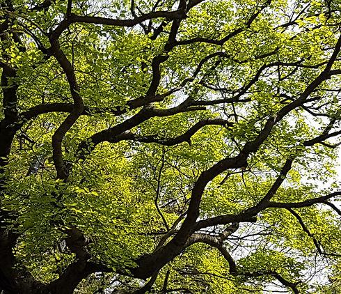 Hong Kong tree_edited.jpg