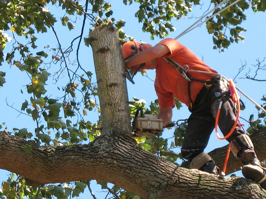 Jersey Tree Care