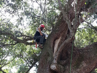 Tree assessment