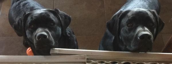 Celzo's Puppies.jpg