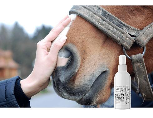 Horse with Spray.jpeg