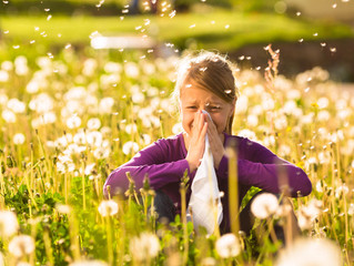 You can cut all the flowers, but you can't stop the allergies from coming