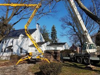 Tree Service Emergency