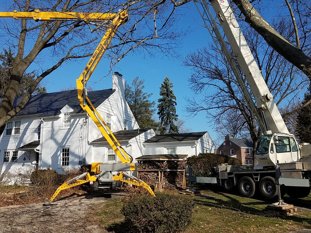 Tree Service Emergency