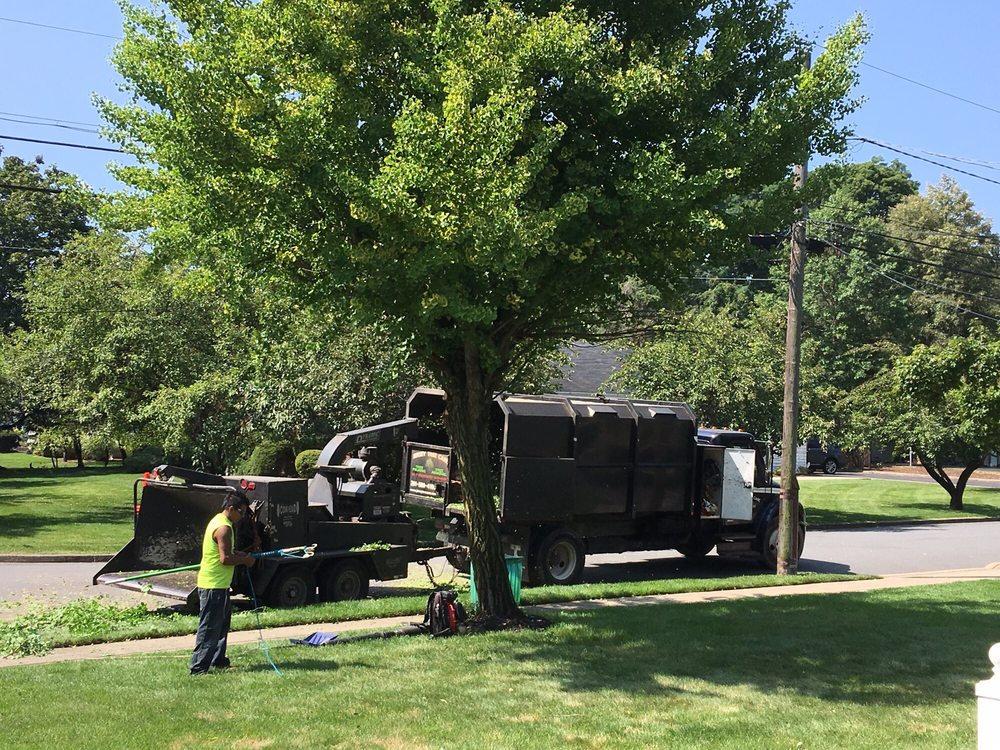 Jersey Tree Service