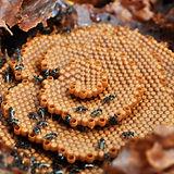 native bees.jpg