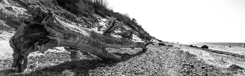 beach landscape panoramic tree wood trunk ancient