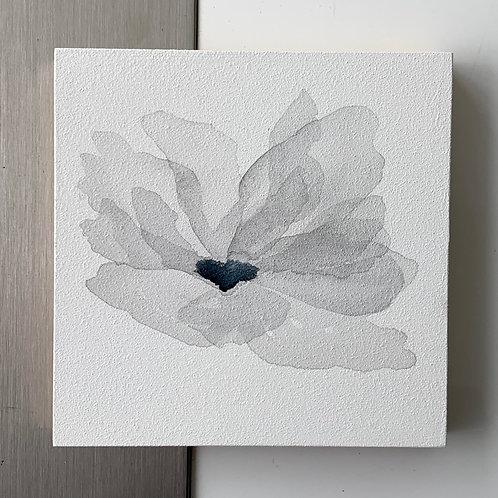 grey bloom
