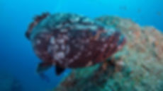 01_Madeira-Diving-Center.jpg