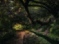 wandern-auf-madeira