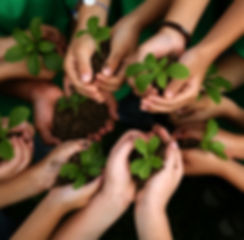 manos niños plantas