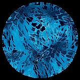 circle_prym1_shoreline.PNG