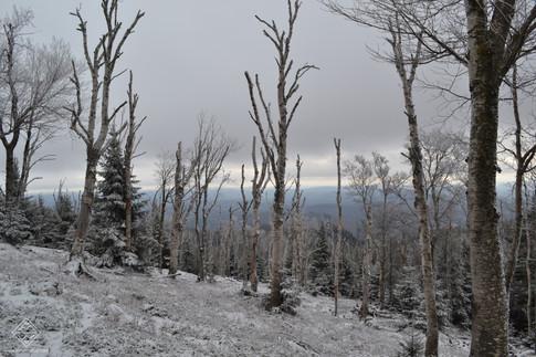 Randonnées au Québec
