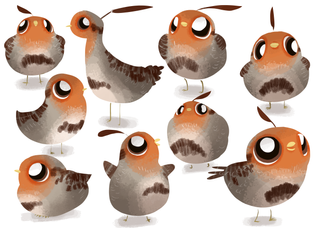 Little Partridge Character Exploration