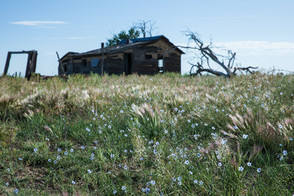 Johnson pasture landscape, Branson area.