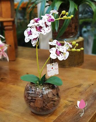 Arranjo de Orquídea Branca Pintada P