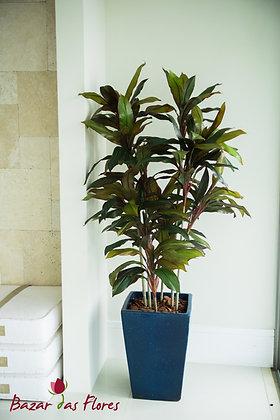 Dracena Cordyline 1,70m H (Somente a árvore)