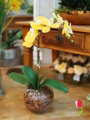 Arranjo de Orquídea Amarela