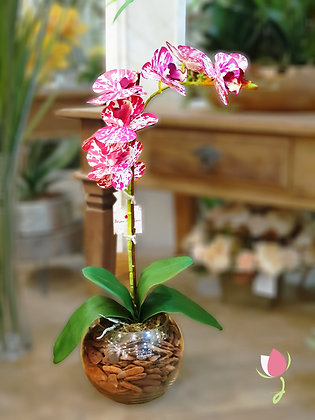 Arranjo de Orquídea Rosa Tigre