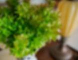Folhas de Laranjeira - Bazar das Flores