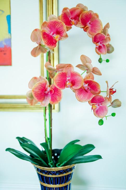 Arranjo de Orquídeas Phalaenopsis Permanentes