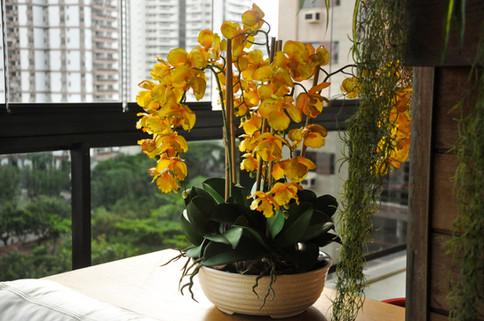 Arranjo de Orquídeas Amarelas Permanentes