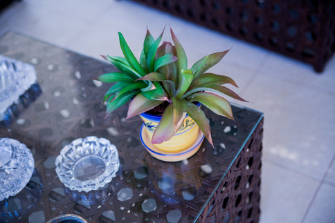 Arranjo de Agaves Aloe Permanentes