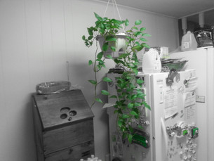 Fun With Photo Color Effects:  All About Green