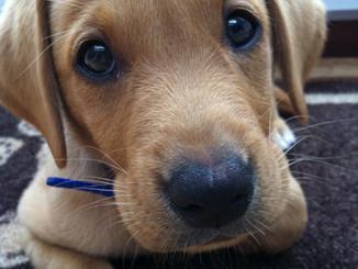 charlie cute.JPG