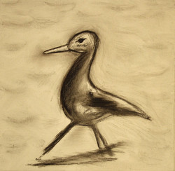 Bird Strutting