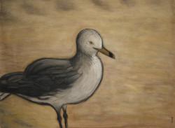 seagull at hammonassett no. 2