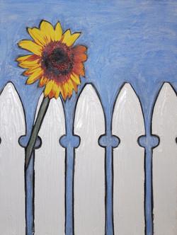 Sunflower & Picket Fence