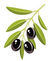 올리브 잎.jpg