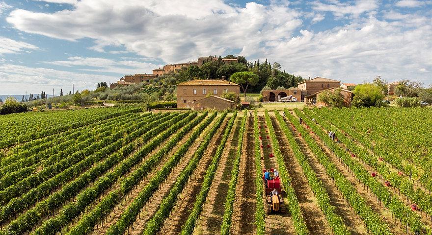 와인농장 아시아노.jpg