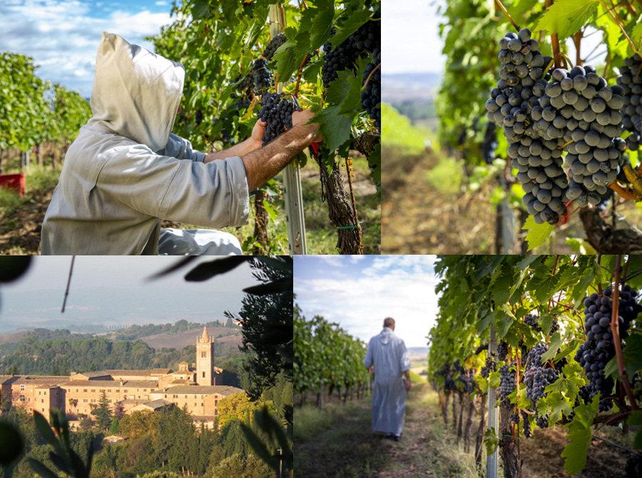 와인수확.jpg