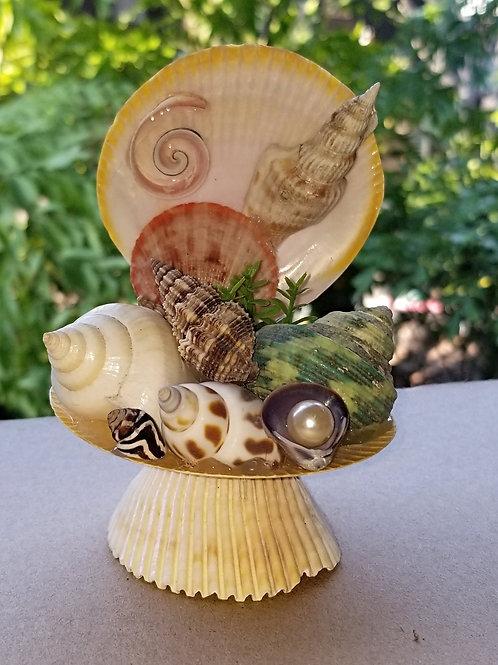 Seashell Clam MK04