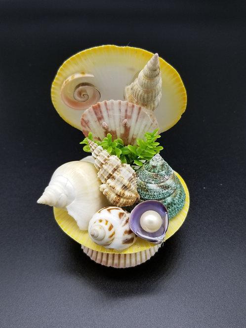 Seashell Treasure Clam