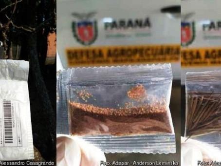 Adapar alerta: sementes vindas da China são de plantas invasoras