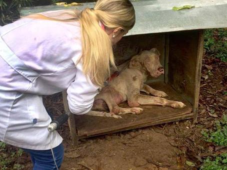 Abertas as inscrições para a 2ª edição do curso de atendimento a maus-tratos animais