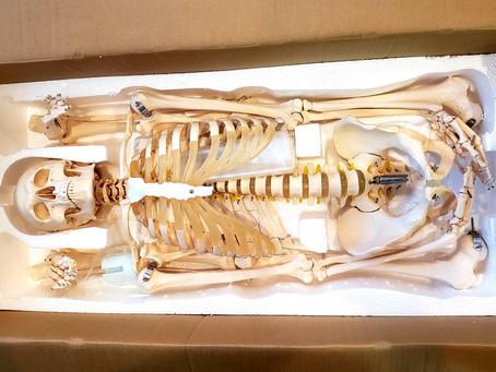 人体模型が届きました~o(^o^)o