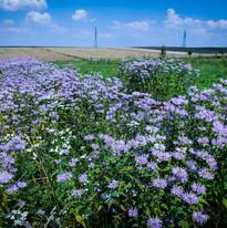 Herb field