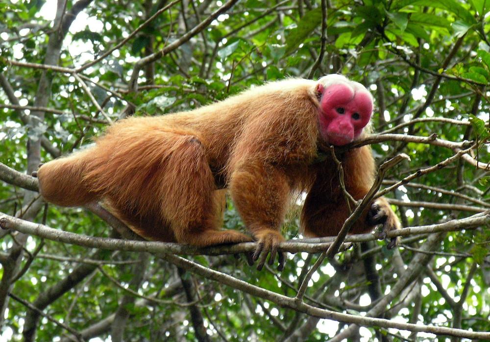 Ils mangent des fruits et en répandent les graines : les grands animaux aident ainsi les arbres à s'installer plus loin. Bilan final dans les forêts tropicales : le stockage du carbone augmente, comme vient de le démontrer une étude. Protéger les animaux, c'est donc atténuer le changement climatique...