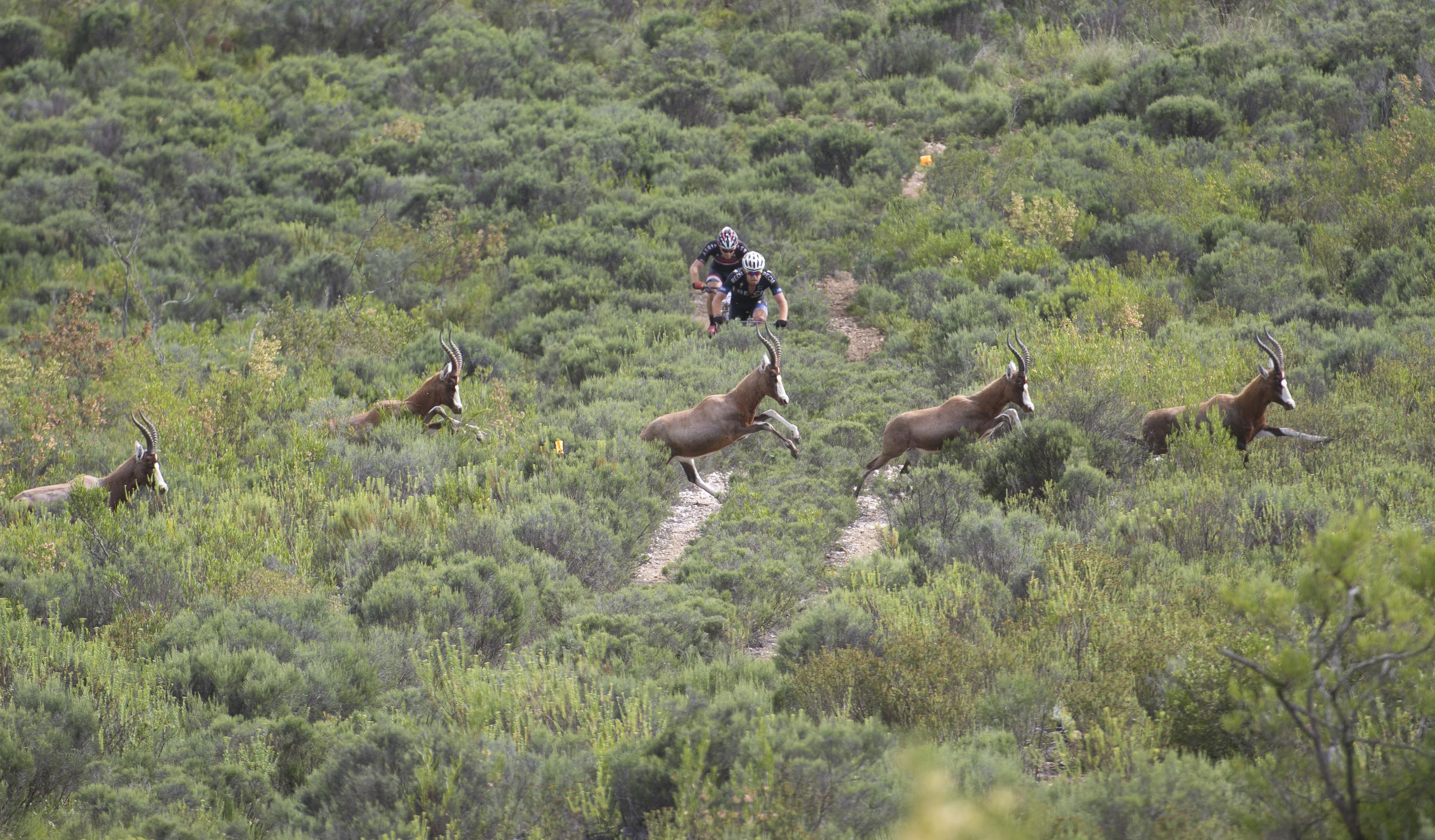 Cape Pioneer Trek 2015-6189