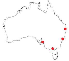 emergent works business management consultant in australia