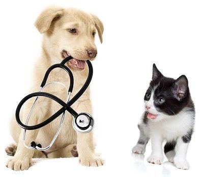 consultatie-hond-en-kat.jpg