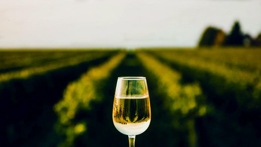 Au Rythme des Vignes - verre de dégusta