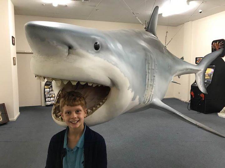 Replica great white shark